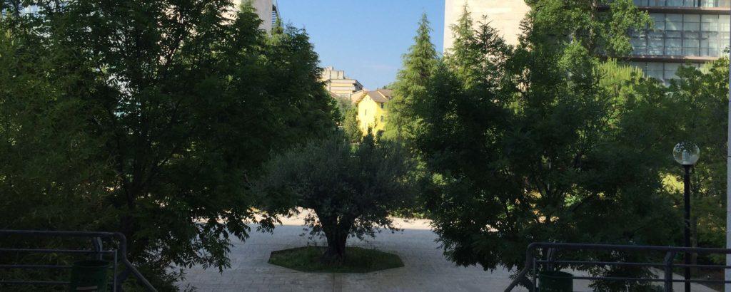 alberi campus Chieti